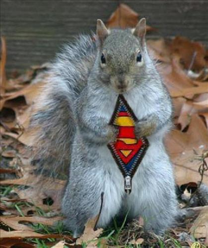 Funny-Squirrel, not a Lower School Host