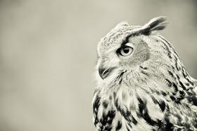 Wise-owl-photo-shutter-280